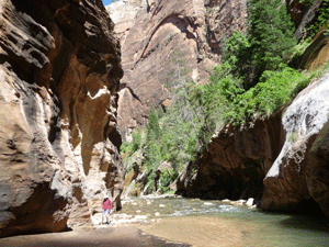 Upriver from the waterfall The Narrows Zion