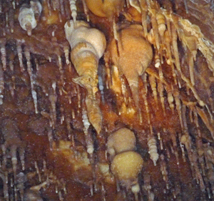 Ceiling formations Lehman Caves NV