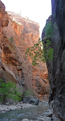 The canyon rim The Narrows Zion