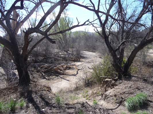 Arivaca Creek