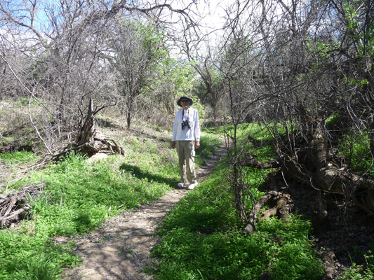 Walter Cooke Arivaca Creek Trail Buenos Aires NWR