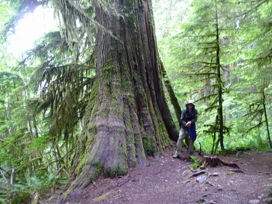Walter Cooke and old growth Western Red Cedar