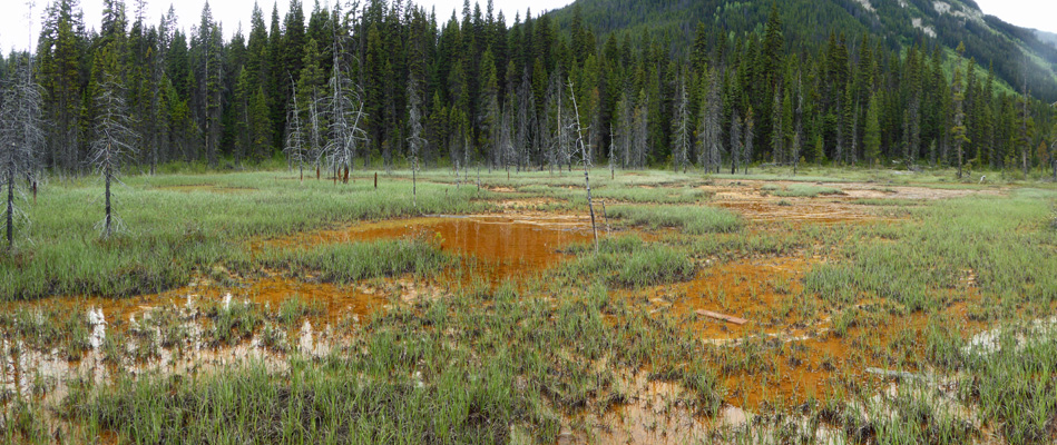 orange-puddled meadow