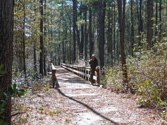 Walter Cooke boardwalk Sundew Trail Big Thicket