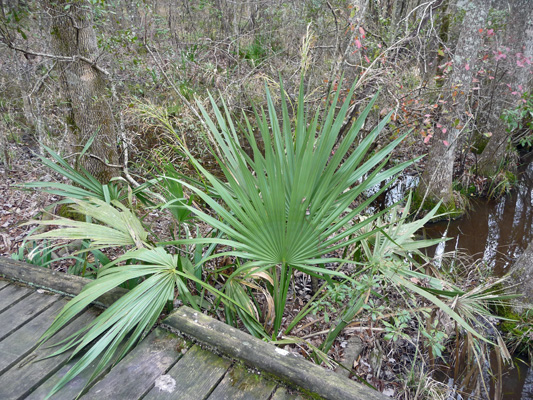Palmetto Slough Trail Martin Dies SP