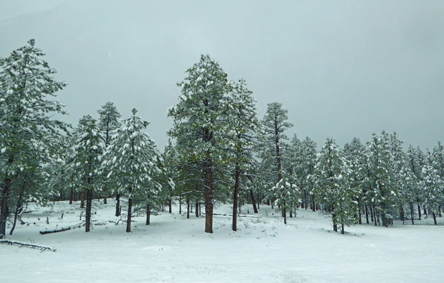 Bryce canyon NP in snow