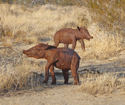 Merriam's Tapirs sculpture Borrego Springs, CA