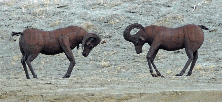 Desert Big Horn Sheep sculptures Borrego Springs CA