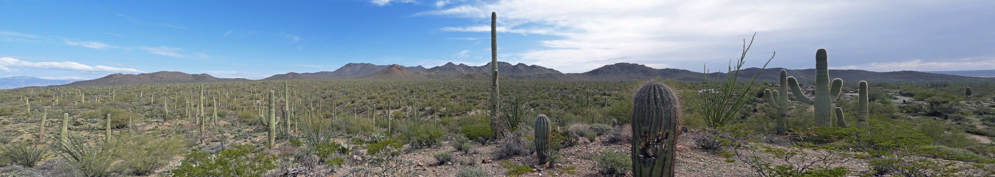 Eastward view Signal ill Saguaro National Park