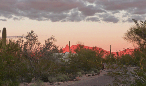 Sunset at Organ Pipe National Monument
