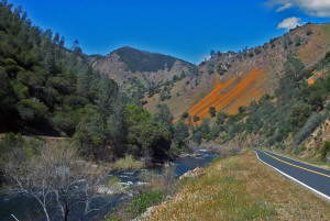Merced River Poppies