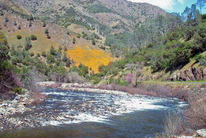 Merced River with poppies