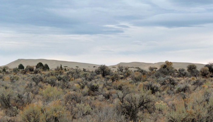 Sand Dunes in Oregon Outback
