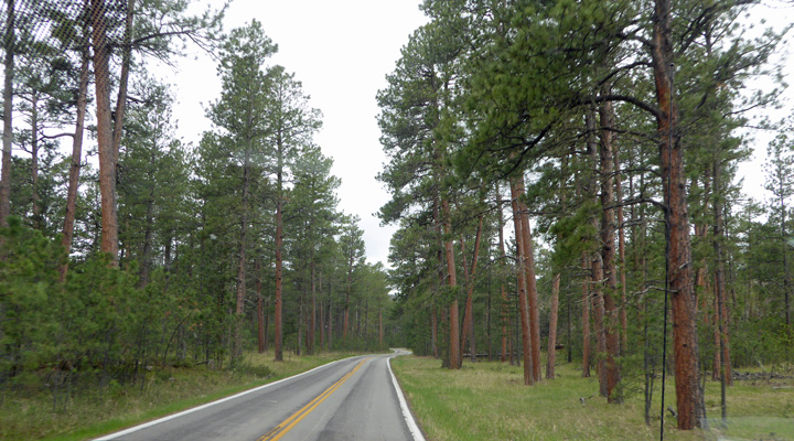 Ponderosa Pines Needles Hwy