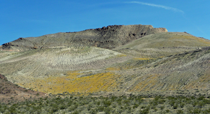 Wildflowers at Rhyolite