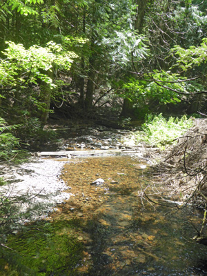 Creek at South Skookum Lake