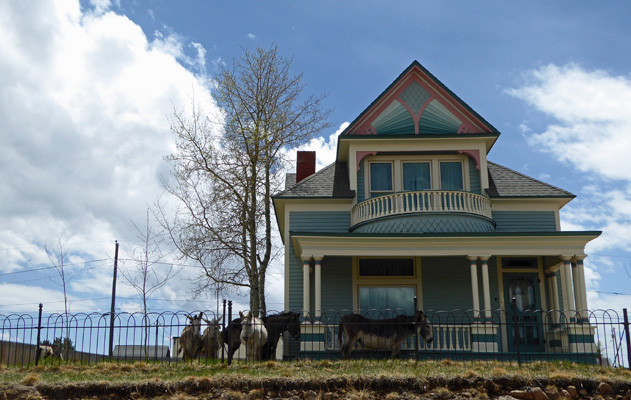 Cripple Creek donkeys and Victorian