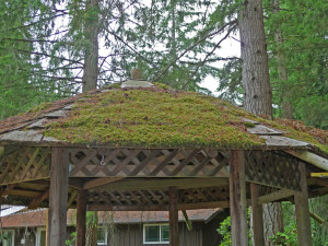 Gazebo with moss growing on the roof