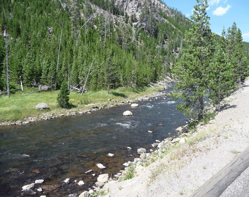 Gibbon River Yellowstone