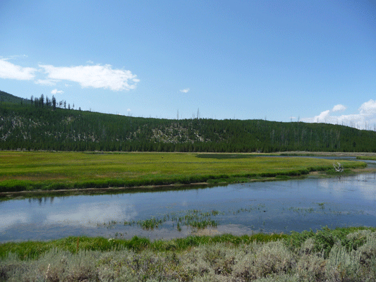 Meadow in Yellowstone