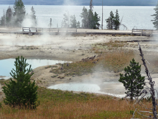 West Thumb Geyser Basin Yellowstone