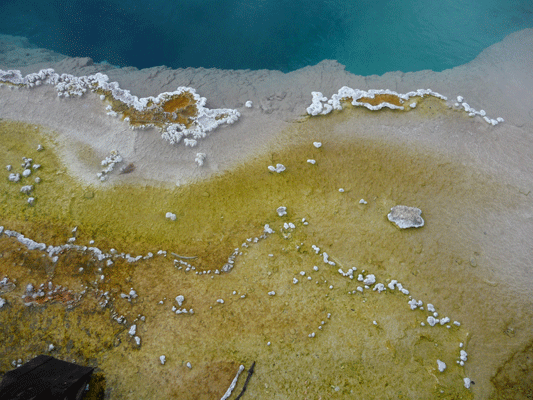Yellow algae in hot spring Yellowstone