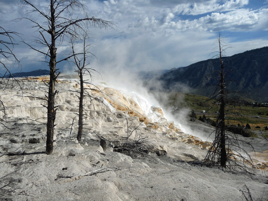Canary Springs Yellowstone