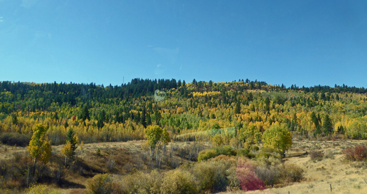 Swan Valley ID fall color
