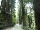 Howland Hill Rd Redwood NP
