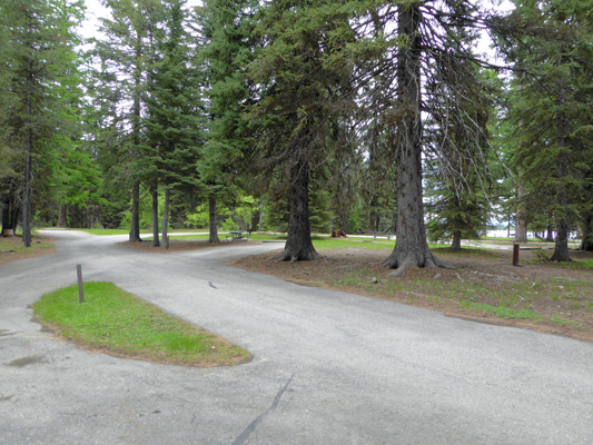 Treed sites at Huckleberry Campground