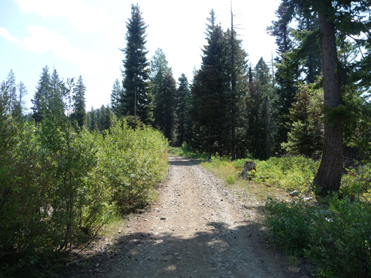 Jeep trail portion of Louie Lake Trail