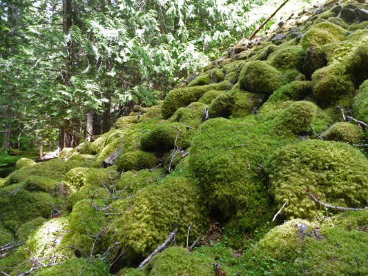 Mossy boulders at forest's edge