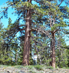 Walter and Young Ponderosa Pines