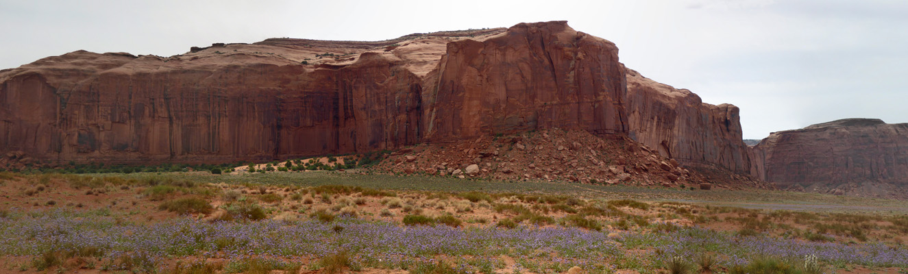 Phacelia and red rocks