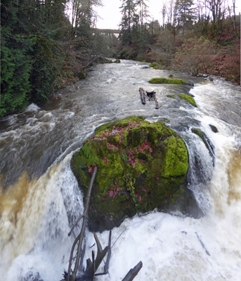 Lower Tumwater Falls