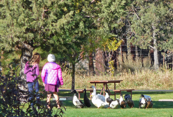 Little girls and ducks and geese