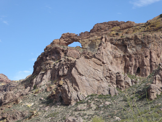 Arch Organ Pipe Cactus NM
