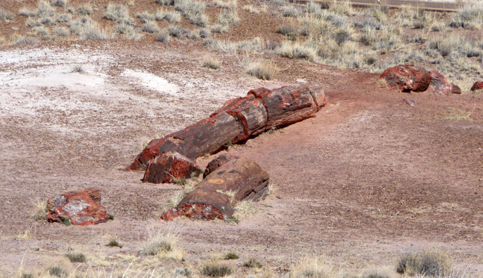 logs at Jasper Canyon Petrified Forest NP