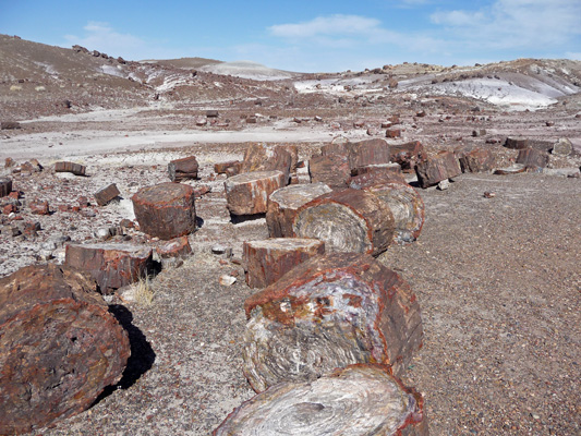 Petrified logs Crystal Forest