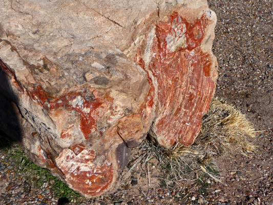Petrified wood Petrified Forest NP