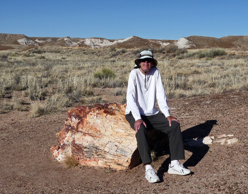Walter Cooke Petrified Forest NP