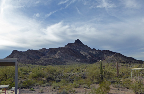Pinkley Peak Organ Pipe Cactus NM