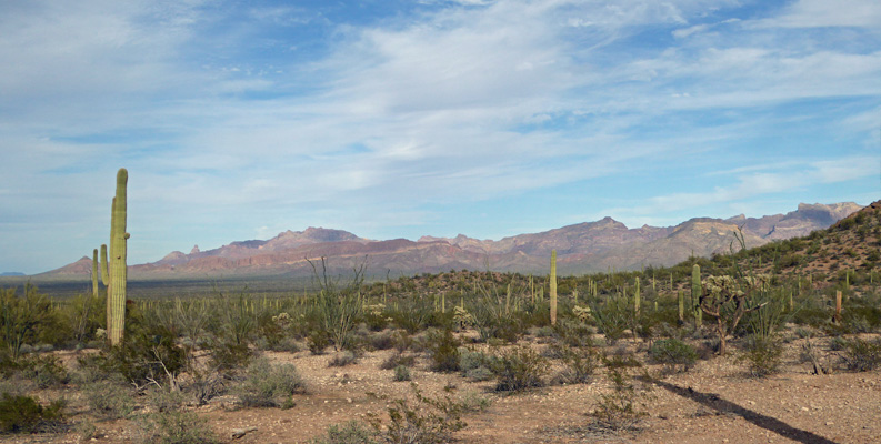 Ajo Mountains from Pinkley Peak Picnic area
