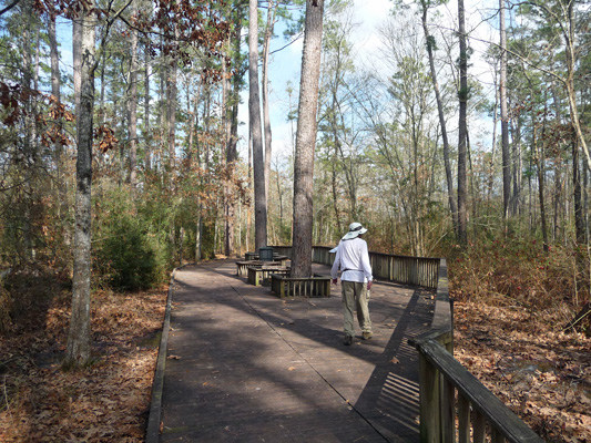 Boardwalk on Pinewoods Trail Lake Livingston SP