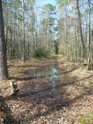 Equestrian trail Lake Livingston SP