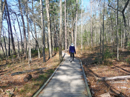 Long boardwalk Huntsville SP