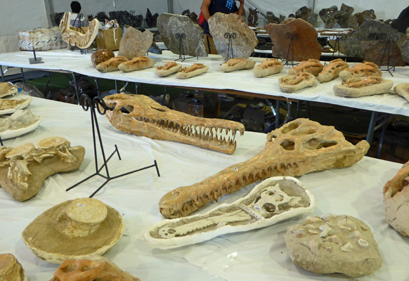 Fossils at Tucson Gem Show