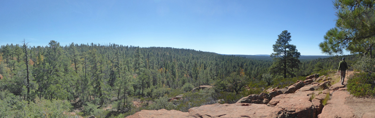 Mogollon Rim Trail view