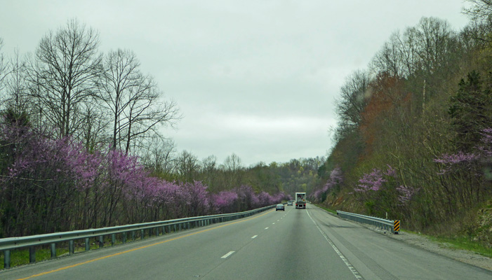 Redbuds I-40 Tennessee