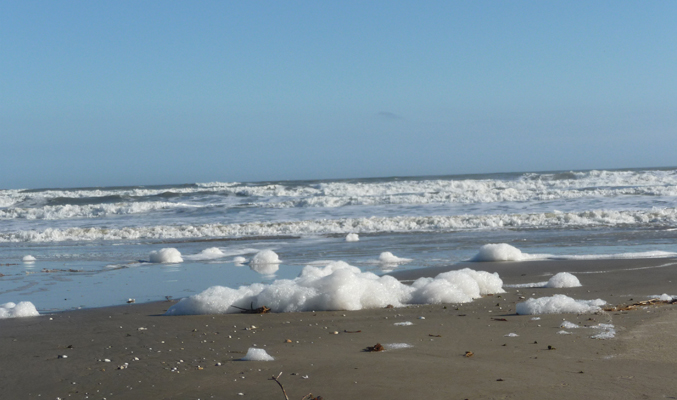 Beach foam Galveston Is SP